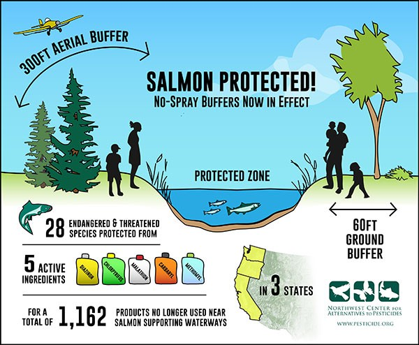 NCAP says 300 foot buffers for helicopter herbicides protects salmon (and people)